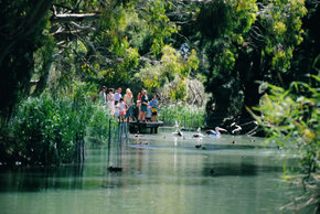 Cleland Wildlife Park - Attractions Melbourne