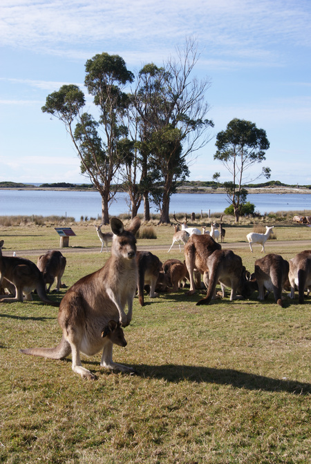 East Coast Natureworld - Attractions Melbourne