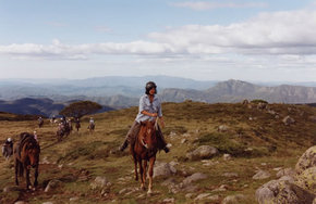 High Country Horses - Attractions Melbourne