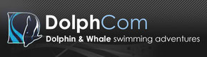 Dolphcom - Dolphin  Whale Swimming Adventures - Attractions Melbourne