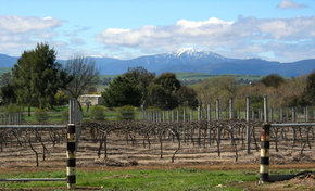 Buller View Wines - Attractions Melbourne