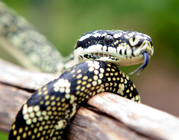 Reptile Encounters - Attractions Melbourne