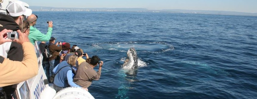Australian Whale Watching - Attractions Melbourne