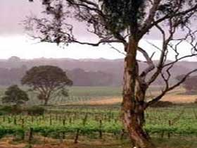 Yangarra Estate Vineyard - Attractions Melbourne