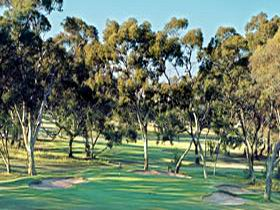 Tanunda Pines Golf Club - Attractions Melbourne
