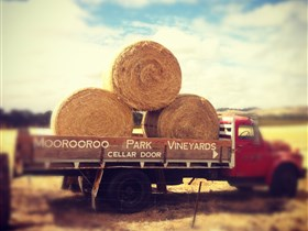 Moorooroo Park Vineyards - Attractions Melbourne