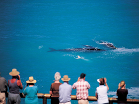 Whale Watching At Head Of Bight - Attractions Melbourne