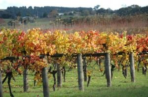 Apsley Gorge Vineyard - Attractions Melbourne