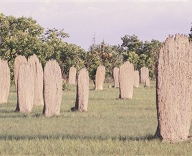 Magnetic Termite Mounds - Attractions Melbourne