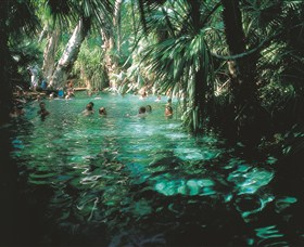 Mataranka Thermal Pool - Attractions Melbourne