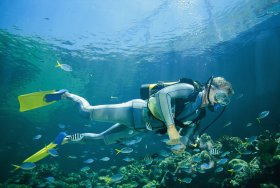 Kirra Reef Dive Site - Attractions Melbourne