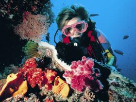 Cook Island Dive Site - Attractions Melbourne