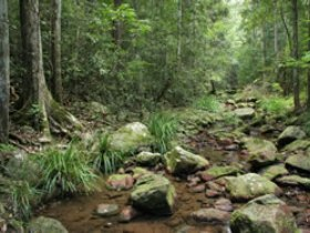 Amamoor State Forest - Attractions Melbourne