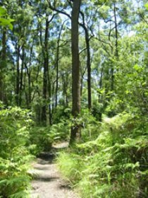 Mapleton Falls National Park - Attractions Melbourne