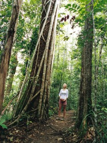 Wet Tropics - Attractions Melbourne