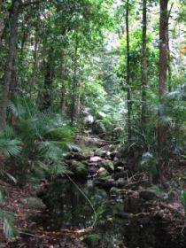 Mossman Gorge Rainforest Circuit Track Daintree National Park - Attractions Melbourne