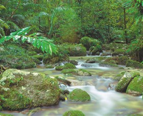 Mossman Gorge Daintree National Park - Attractions Melbourne