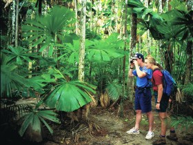 Mount Sorrow Ridge Trail Daintree National Park - Attractions Melbourne