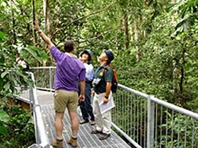 Daintree Discovery Centre - Attractions Melbourne