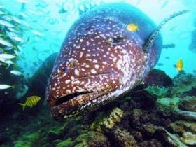 Lady Musgrave Island Dive Sites - Attractions Melbourne