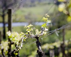 Elan Vineyard and Winery - Attractions Melbourne