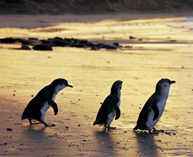 Phillip Island Nature Park - Attractions Melbourne