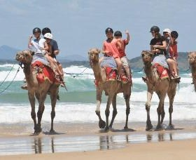 Camel Rides with Coffs Coast Camels - Attractions Melbourne