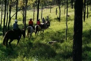 Hunter Valley Horse Riding and Adventures - Attractions Melbourne
