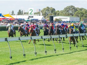 Morphettville Racecourse - Attractions Melbourne
