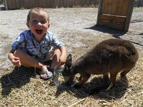Animal Farm Goolwa - Attractions Melbourne