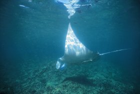 Manta Ray Bay Dive Site - Attractions Melbourne