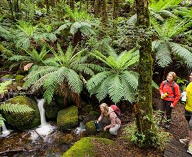 Baw Baw National Park - Attractions Melbourne