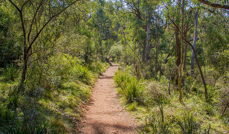 Mares Forest Creek walking track - Attractions Melbourne