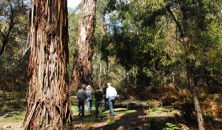 Tallaganda National Park - Attractions Melbourne