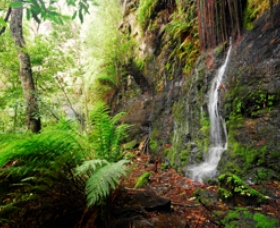 Fairy Bower Falls - Attractions Melbourne
