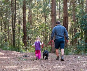 Olney State Forest - Watagan Mountains - Attractions Melbourne