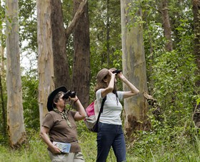 Chichester State Forest - Attractions Melbourne