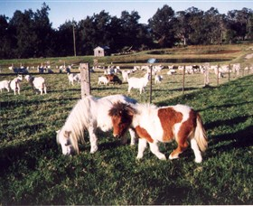 Trudgalong Farm - Attractions Melbourne