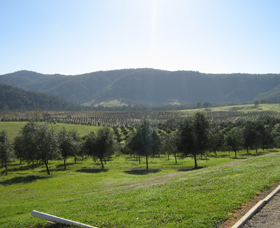Hastings Valley Olives - Attractions Melbourne