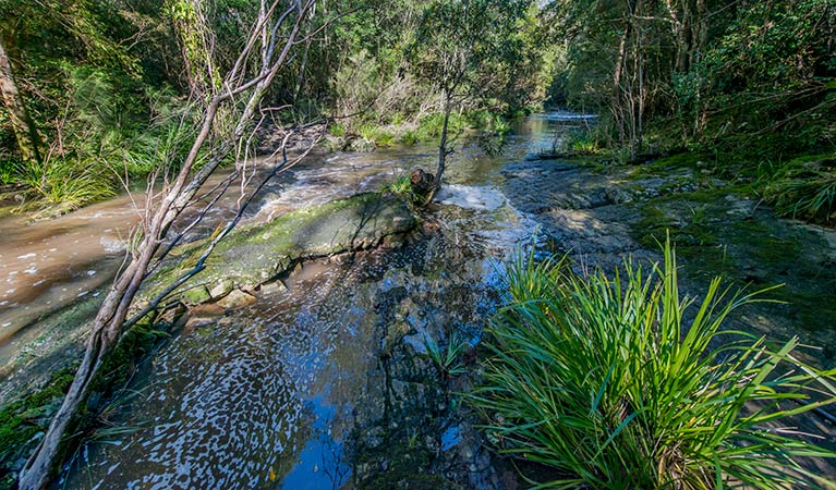Dawson River walking track - Attractions Melbourne