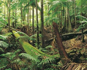 Wollumbin-Mount Warning National Park - Attractions Melbourne