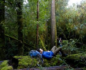 The Tarkine Drive - Attractions Melbourne
