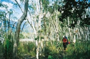 Thorsborne Trail Hinchinbrook Island National Park - Attractions Melbourne