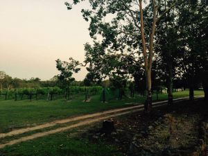 Brierley Wines - Attractions Melbourne