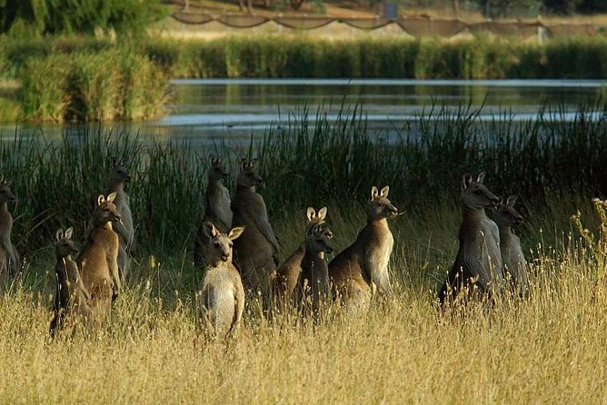 Canberra  The National Capital  Full Day Private Tour  Departs from Sydney - Attractions Melbourne