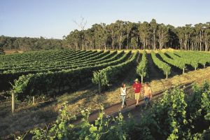 Margaret River Caves Wine and Cape Leeuwin Lighthouse Tour from Perth - Attractions Melbourne