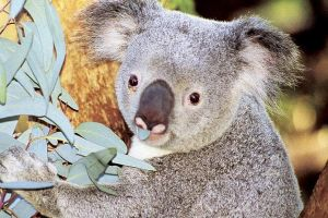 Perth Zoo General Entry Ticket and Sightseeing Cruise - Attractions Melbourne