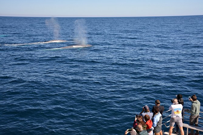 Blue Whale Perth Canyon Expedition - Attractions Melbourne