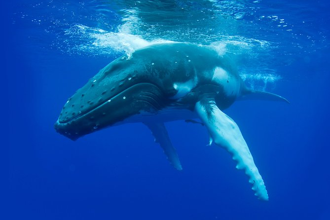 Whale-Watching Cruise from Dunsborough - Attractions Melbourne