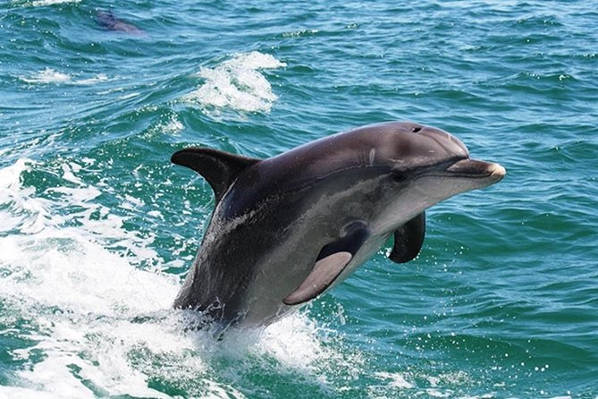 Half-Day Mandurah Canals  Dolphin Watch Tour - Attractions Melbourne
